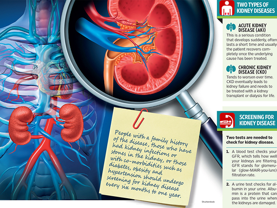 Check Your Kidney Function